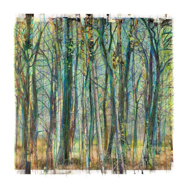 Werken van Waldo van Bokhoven aanschaffen via de kunstkoopregeling
